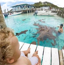 Shark Bait dad